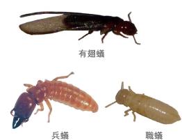 ホウ酸系防蟻剤5
